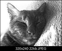 Kliknite na sliku za veću verziju  Ime:DSC00022.JPG Viđeno:8 puta Veličina:22,2 KB ID:31680