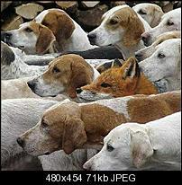 Kliknite na sliku za veću verziju  Ime:lisica.jpg Viđeno:746 puta Veličina:70,7 KB ID:5921