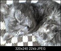 Kliknite na sliku za veću verziju  Ime:DSC00026.JPG Viđeno:6 puta Veličina:22,1 KB ID:31681